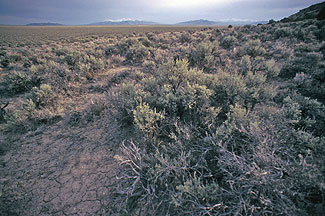 Sage Brush in Elko County Nevada
