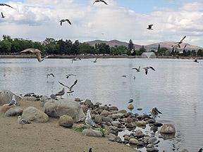 Virginia Lake Park, Reno, Nevada