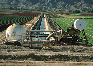 Fertilizer application applied directly into irrigation system for flood application.