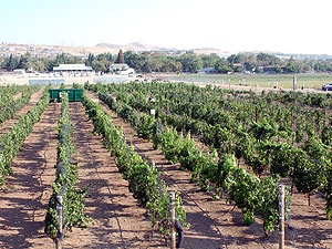 University of Nevada wine vinyard on Valley Road, Reno.