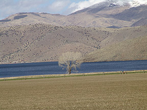 Alfalfa field next to Topaz Lake, Nevada