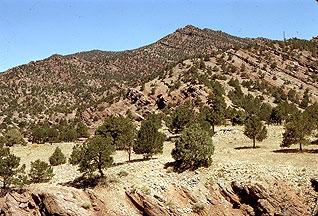 Pinon-Juniper rangeland ecosystem