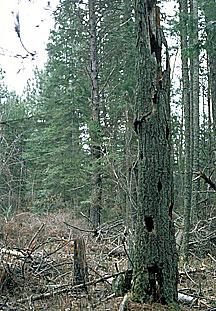 Accumulation of biomass around Lake Tahoe