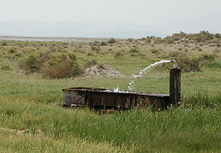 Artesina well in Humboldt County Nevada