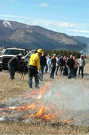 Students conduct an investigation into the effects of fire on cheatgrass