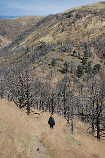 Surveying burned area in Eureka, Co. Nevada