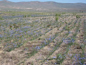 Field in East Humboldt County, Nevada