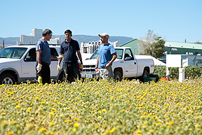 Majid Reza Beheshtian, Bishnu Neupane and Patrick Freeze helps harvest Gumweed at VRFL for Dr. Glenn Miller' research on bio-fuels.