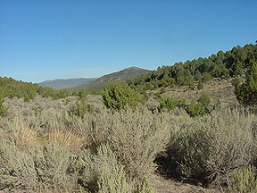 Pinon-Juniper dominated landscape.