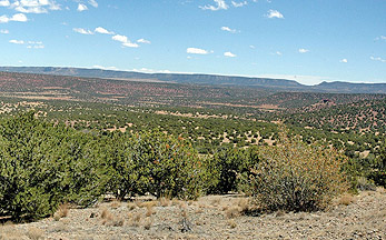 Eastern Nevada rangeland covered in pinyon-juniper trees.