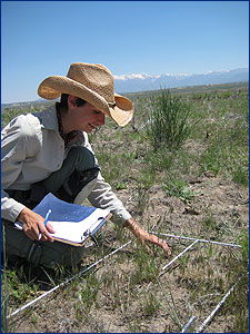 Researcher documenting native plants competitiveness against cheatgrass