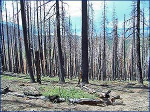 2007 Angora Fire, South Lake Tahoe