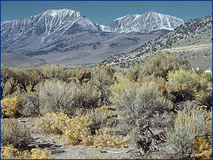 Nevada's Great Basin