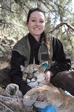 Alyson Andreasen is a PhD student at UNR in the program of Ecology, Evolution and Conservation Biology, pictured her with a recently tagged mountain lion.
