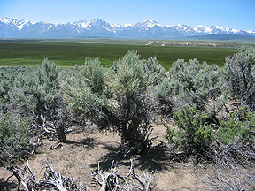 Typical location selected for monitoring sagebrush community