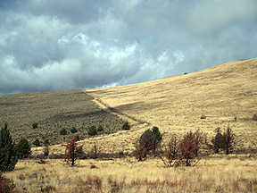 Sagebrush/Cheatgrass boundary
