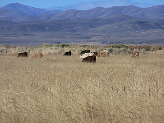 Typical cattle ranch near Winnemucca Nevada