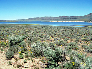 Summit Lake, Nevada