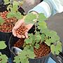 Bio-beads used as alternative to soil.
