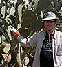 Dr. Cushman inspecting prickly pear cactus
