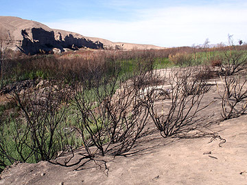 Riparian after a fire