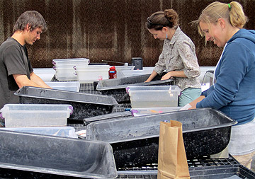 Dr Beth Leger (center) works with students in growing plants in UNR's Greenhouses