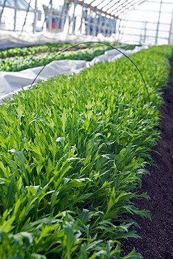Hoop houses located on Agricultural Experiment Station's Valley Road Field Lab