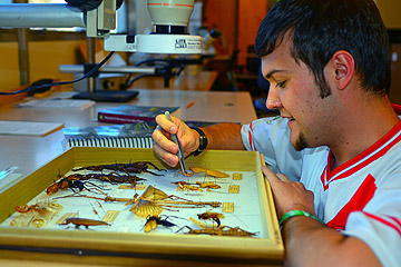 Student inspecting collection of insects at UNR's Museum of Natural History