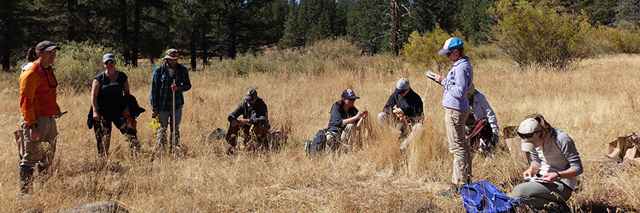 Team of citizen scientist working on meadows
