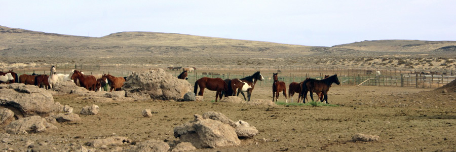 itchfield Corral serves as the regional preparation center for wild horses and burros gathered from public lands in northern California and northwestern Nevada