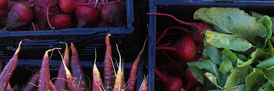 carrots and radishes in plastic crates