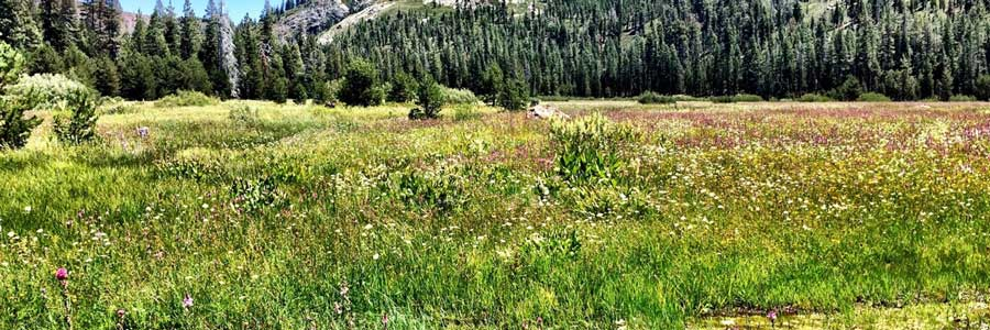 A meadow in the Sierra Nevada mountains