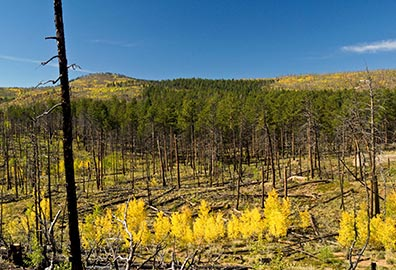 hayman fire recovery in colorado