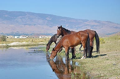 wild horses encroachment on urban areas