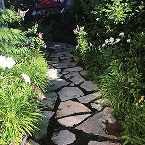 shady walkway with plants