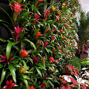 living wall with bromeliads