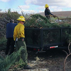 Men loading juniper bushes into a truck