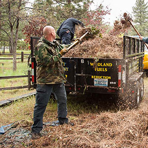 Men shoveling pine needles into a trailer