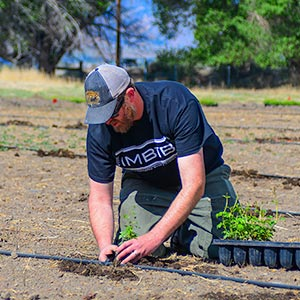 planting hops in nevada