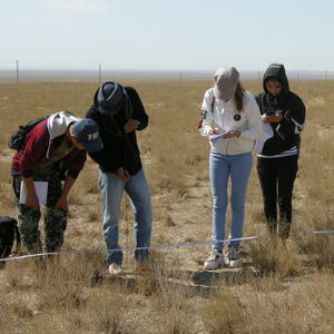 Four Uzbekistan grad students measure sagebrush in a field