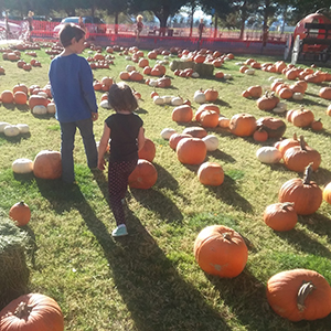 children in a pumpkin farm with lots of pumpkins on the ground