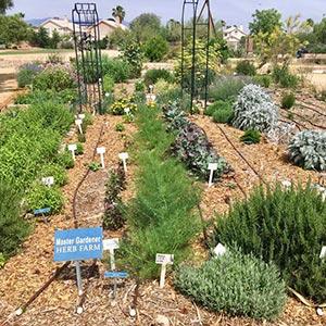 las vegas garden tended by master gardeners