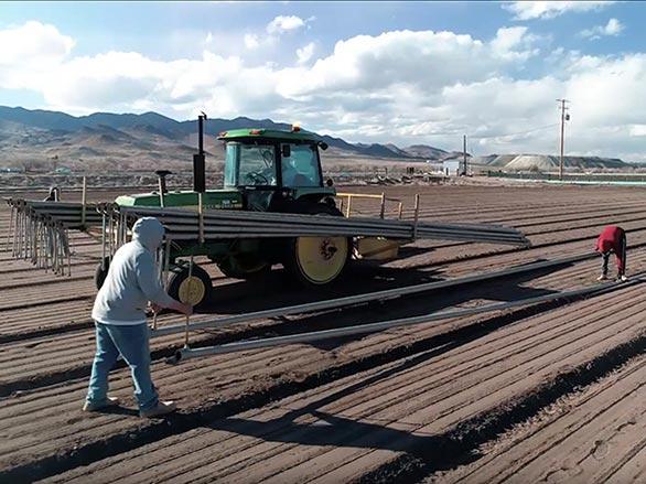 planting onion field