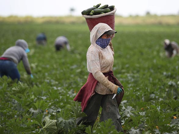 masked farm workers