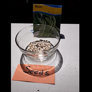 Beans seeds in jar