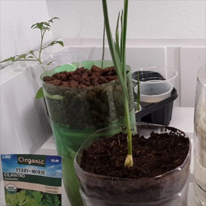 Assortment of DIY hydroponics projects