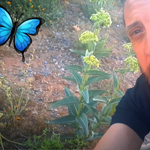 Ian with milkweed