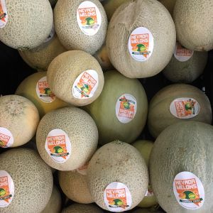 cantaloupe melons with Nevada grown stickers