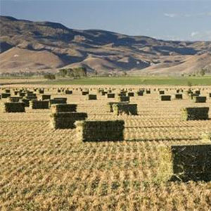 Hay Bales in a field with mountains in the background