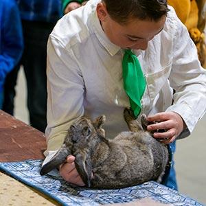 boy showing rabbit